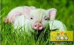 记者追踪:整治生猪养殖场污染 环保部门有了新利器
