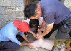 青岛首家国家级畜牧兽医专家服务基地落户