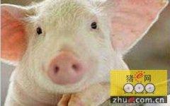 《中国猪业发展报告(2015)》内容简介