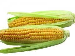 玉米!又一个政策值得关注