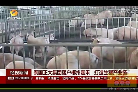 泰国正大集团落户郴州嘉禾 打造生猪产业链