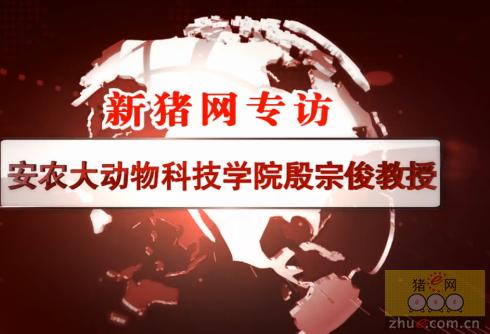 """安农大殷宗俊教授:""""猪王""""养成记(上)"""