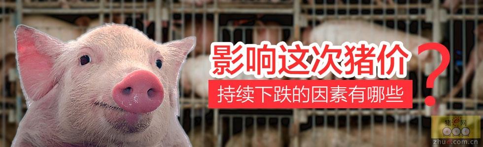 影响猪价持续下跌的因素有哪些?