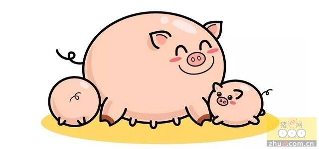 天寒地冻,母猪怎么做好进一步饲养措施?