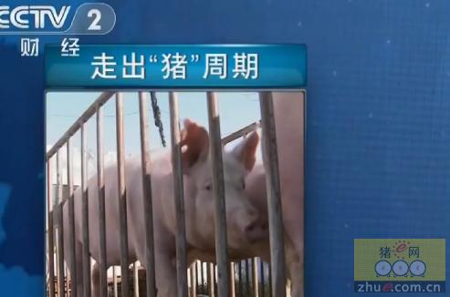 """央视供给侧改革进行时:走出""""猪""""周期"""