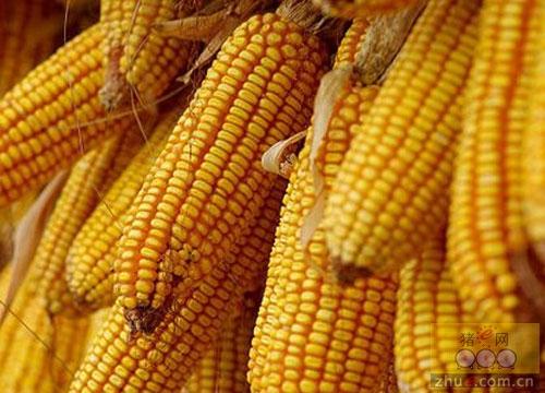 2016年12月13日国内玉米深加工企业即时报