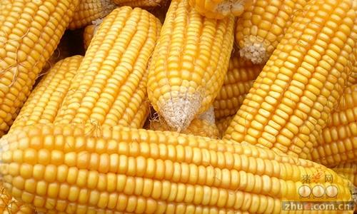 2016年12月13日国内玉米价格汇总