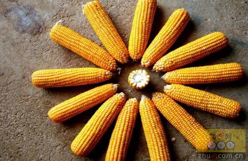 2016年12月15日国内玉米价格汇总