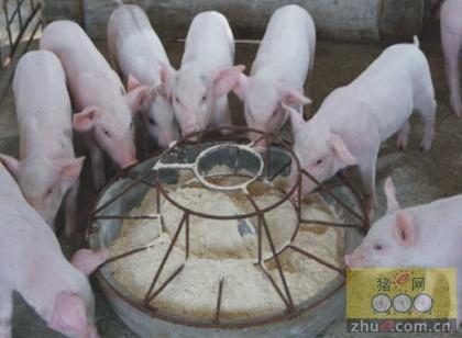 猪场这几种病学会区分,你就是养猪高手