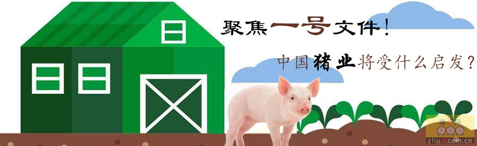 """聚焦""""一号文件""""!对中国猪业发展有何指示?"""