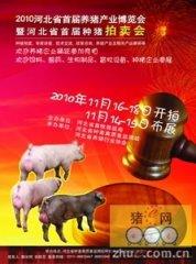 河北省首届种猪拍卖会将于11月中旬召开