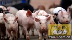 2010第二届中国生猪产业峰会将在绍兴举行