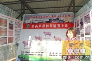 石家庄双鸽美丹参与河北省种猪拍卖会