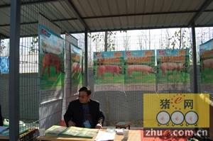 玉田种猪荣获河北省种猪第二第三名