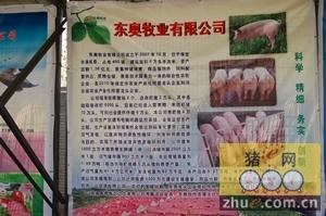 东奥牧业参加河北省种猪拍卖会