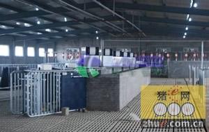 山东临沂首家velos智能化母猪管理系统安装成功