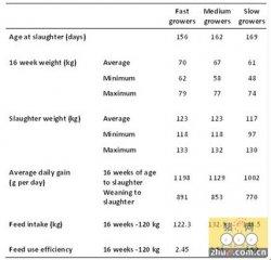 英国新研究:确定生猪的最佳出栏体重