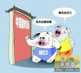 第一届中国华东养猪经济高峰论坛