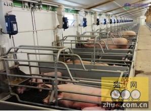提高母猪生产力