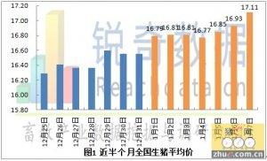 2013年1月8日猪评:河南、湖北猪源紧缺