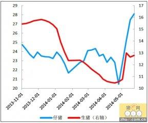 猪肉价格涨幅放缓 短期不具备大幅反弹或反转基础