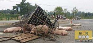 亳州:两车发生追尾 生猪三死一伤