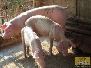 猪毛尾线虫感染容易被忽视