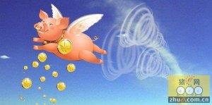 猪站在风口飞!朋友们,风停了怎么办?