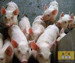 习水斥资2500余万发展生猪家庭农场