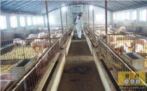 春季猪舍小气候环境管理与疫病防控