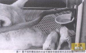 母猪产房管理的38个漏洞不可有!