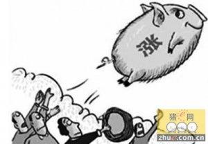 请相信!后期猪价有望突破8元/斤