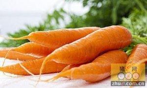 冬春季节多用胡萝卜喂猪