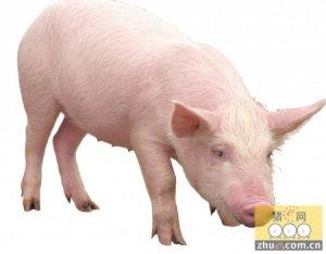 烟台生猪价格由升转降 生产养殖形势严峻