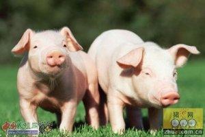 电力做后盾 助推养猪业