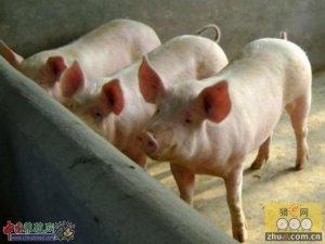 云南生猪市场存栏全国第五 畜牧业产值达1900亿元