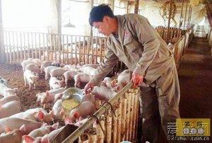 新余市:生态养猪美了乡村富了农民