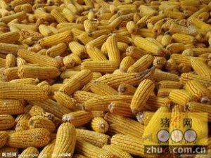 养殖户囤粮是一种堪忧的行为