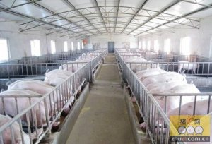 一季度存栏出栏全下降 五一猪肉价格或小涨