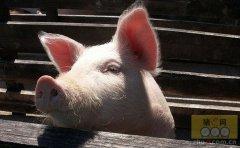 防控有道 各路专家分享养猪防疫经验