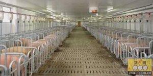 养猪场冬暖式养猪大圈建造的操作和注意事项