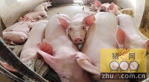 安徽省猪粮比价由黄色区域进入蓝色区域