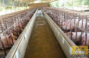 猪场建设十大禁忌