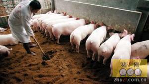 养猪省料的方法