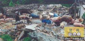 龙海市九湖镇院后村两户非法养猪场被依法拆除