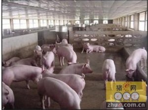 福州生猪收购价可能仍将震荡上升