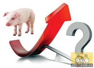 人们心理预期是比较高的也预示着猪价还有上涨空间