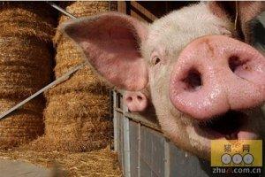 """临海生态化养猪的探索与实践:从""""污物横流""""迈向""""零排放"""""""