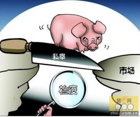 安徽肥东县30%考核挂钩生猪定点屠宰管理工作