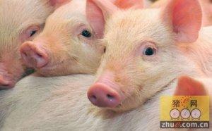 2015年整个行业迎来猪价的回暖